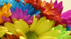 blog - daisies